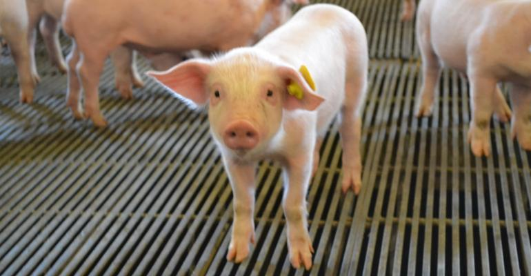 клип крейзи голодная свинья